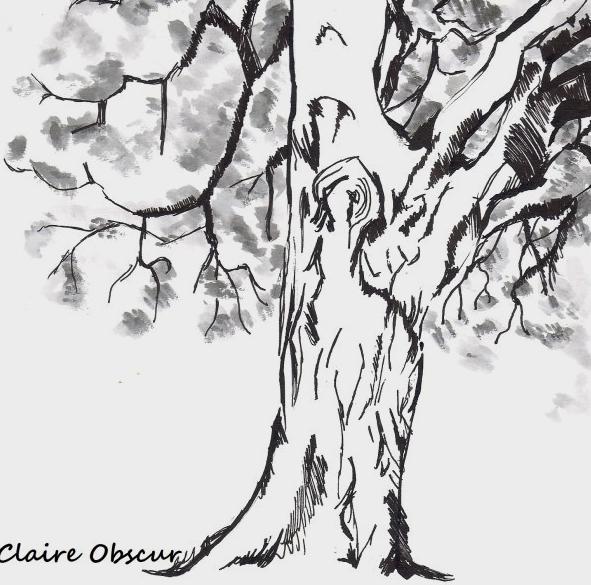 Arbre de sagesse arbredesagesseco